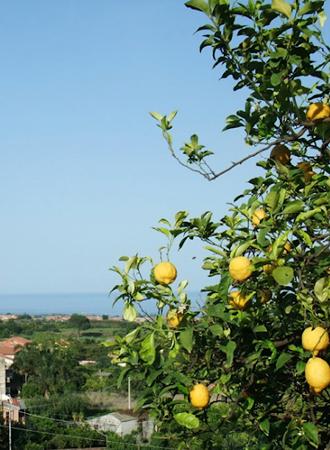 シチリア島でレモン農家のアグリツーリズモに泊まる旅